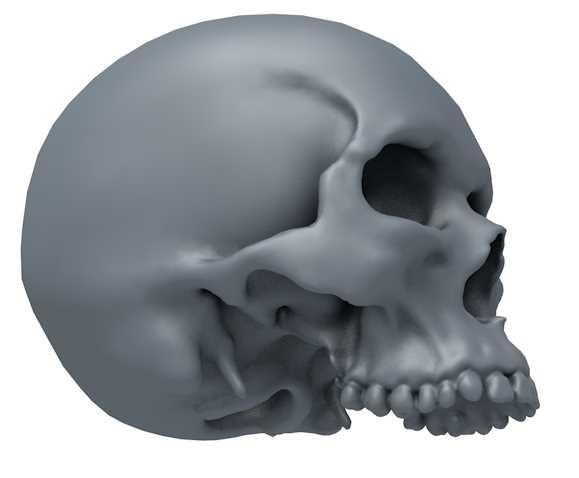 jawless skull 3d model