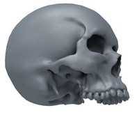 jawless skull 3d model