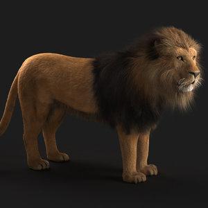 lion fur max