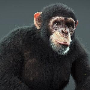 3d model realistic chimp