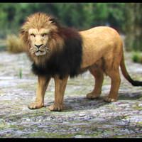 lion fur 3d model