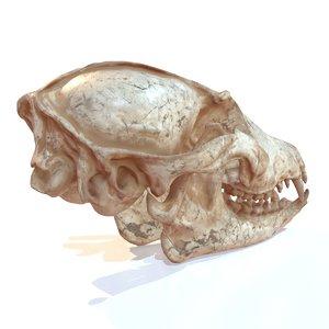 3d model skull decoration