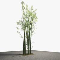 3d exterior bamboo tree