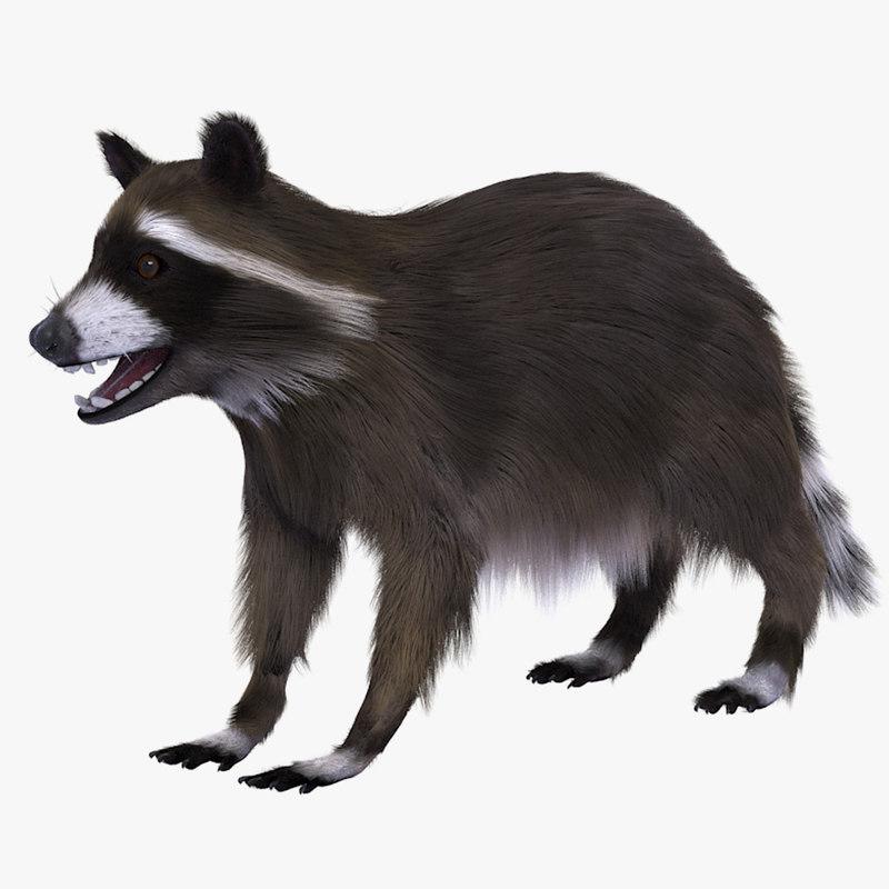 3d model raccoon ornatrix fur
