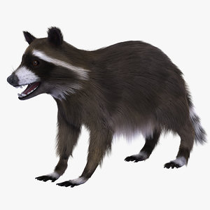 3d model raccoon ornatrix fur
