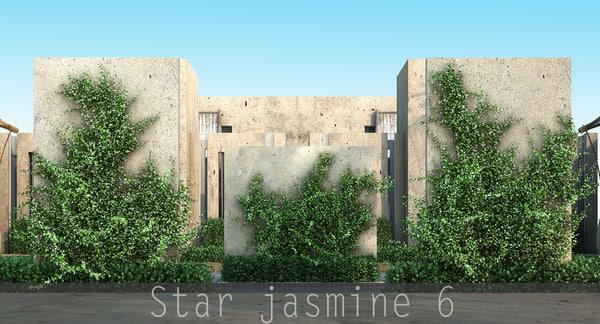 3d star jasmine