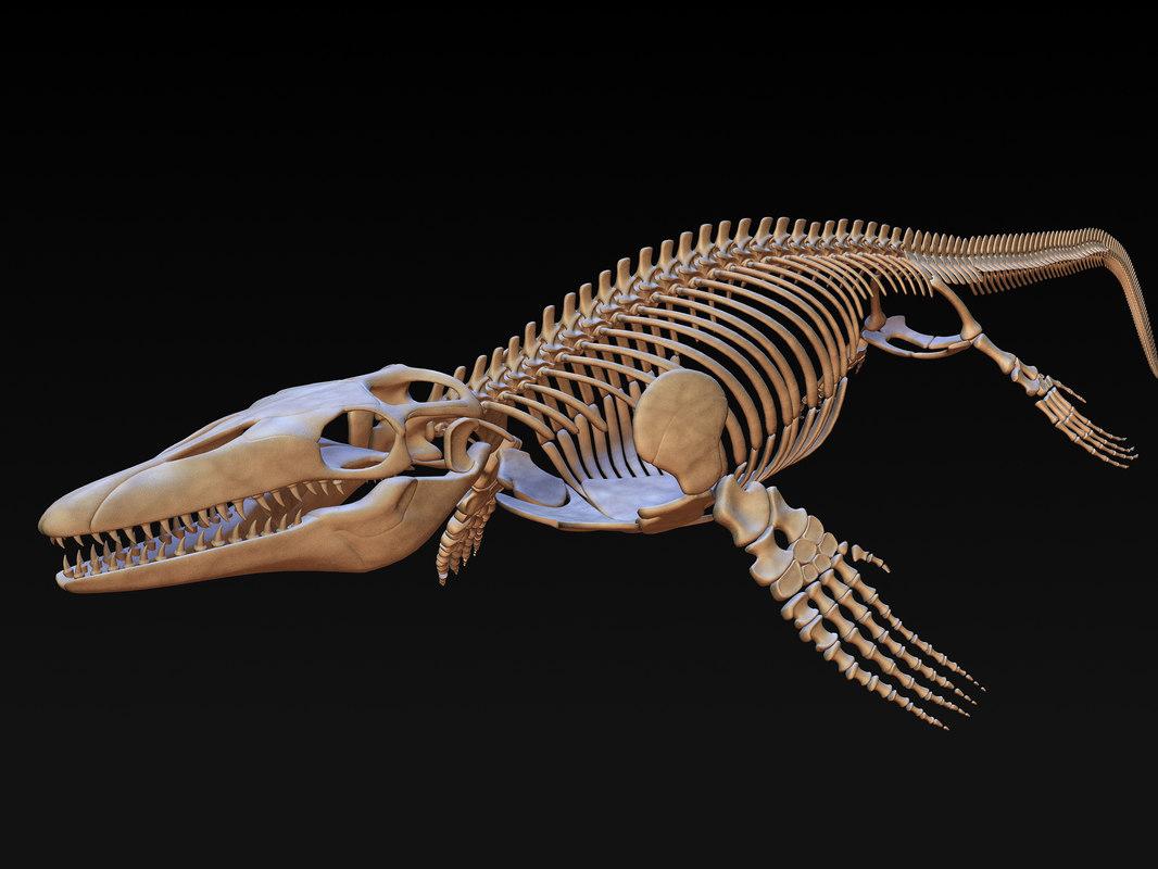 3d mosasaurus skeleton model