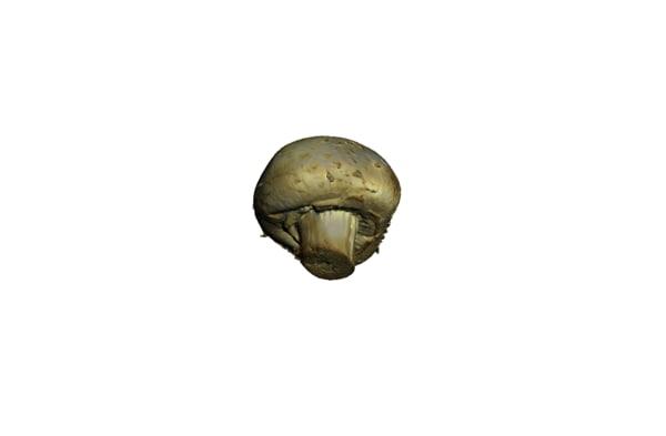 3d champignon mushroom