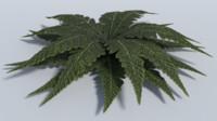 3d obj realistic plant leaf -
