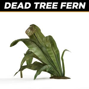 fern plants max
