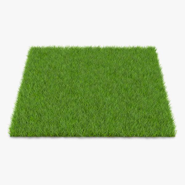 3d fescue grass model