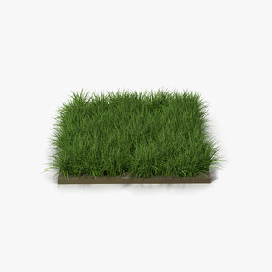3d ryegrass lawns gardens