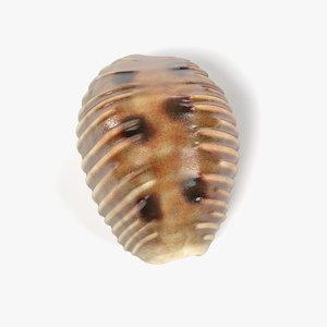 pusula pediculus 3ds