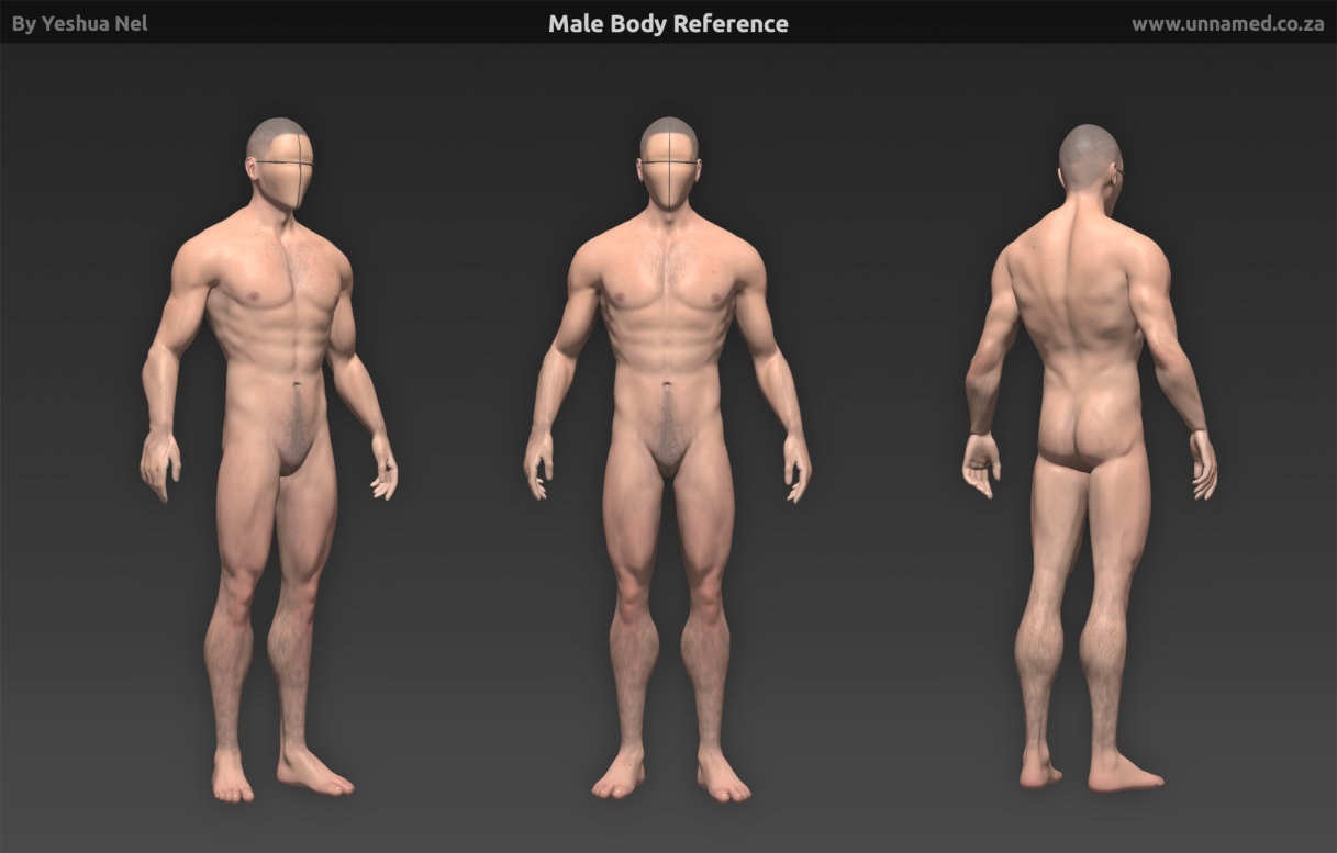 male human body reference 3d obj