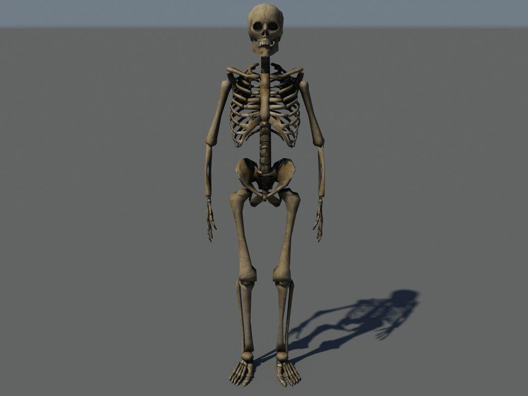 3d max human skeleton