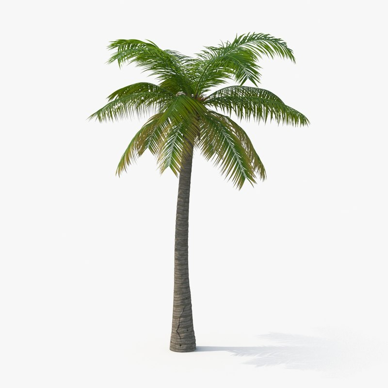 3d palm tree 02 model