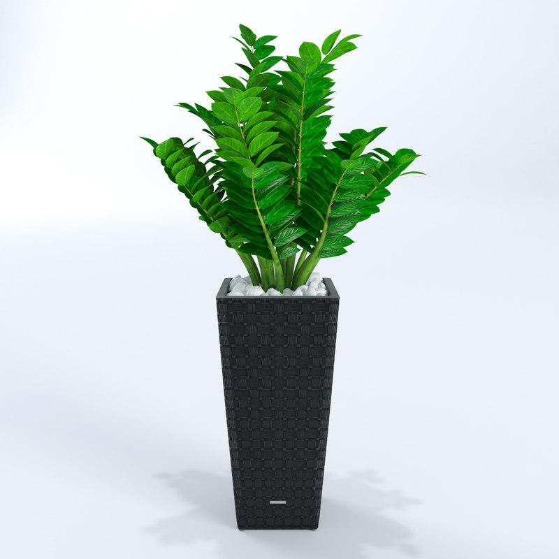 plant zamioculcas flowering 3d max