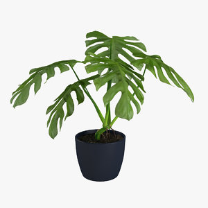 3d model monstera flowering