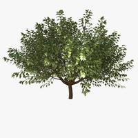 tree decoration 3d 3ds