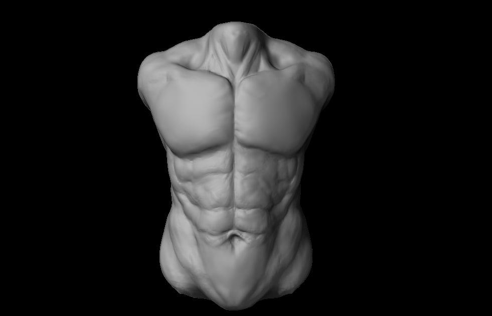human torso 3d model