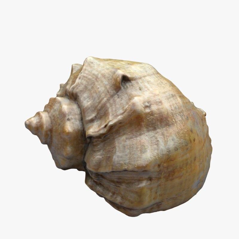 3ds seashell shell sea