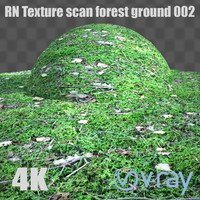 RNtexture scan: forest ground 002
