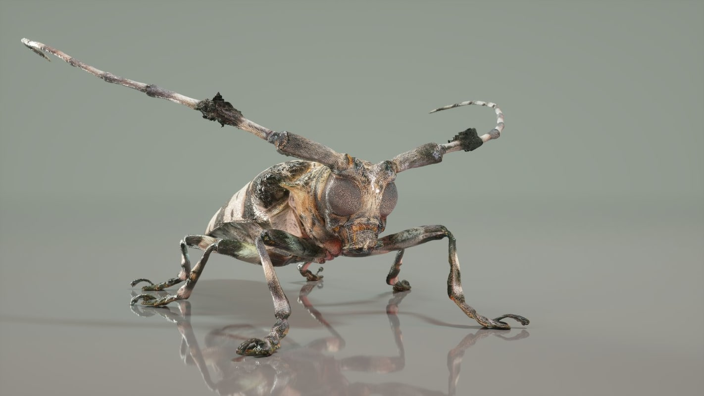 3d boktor beetle model