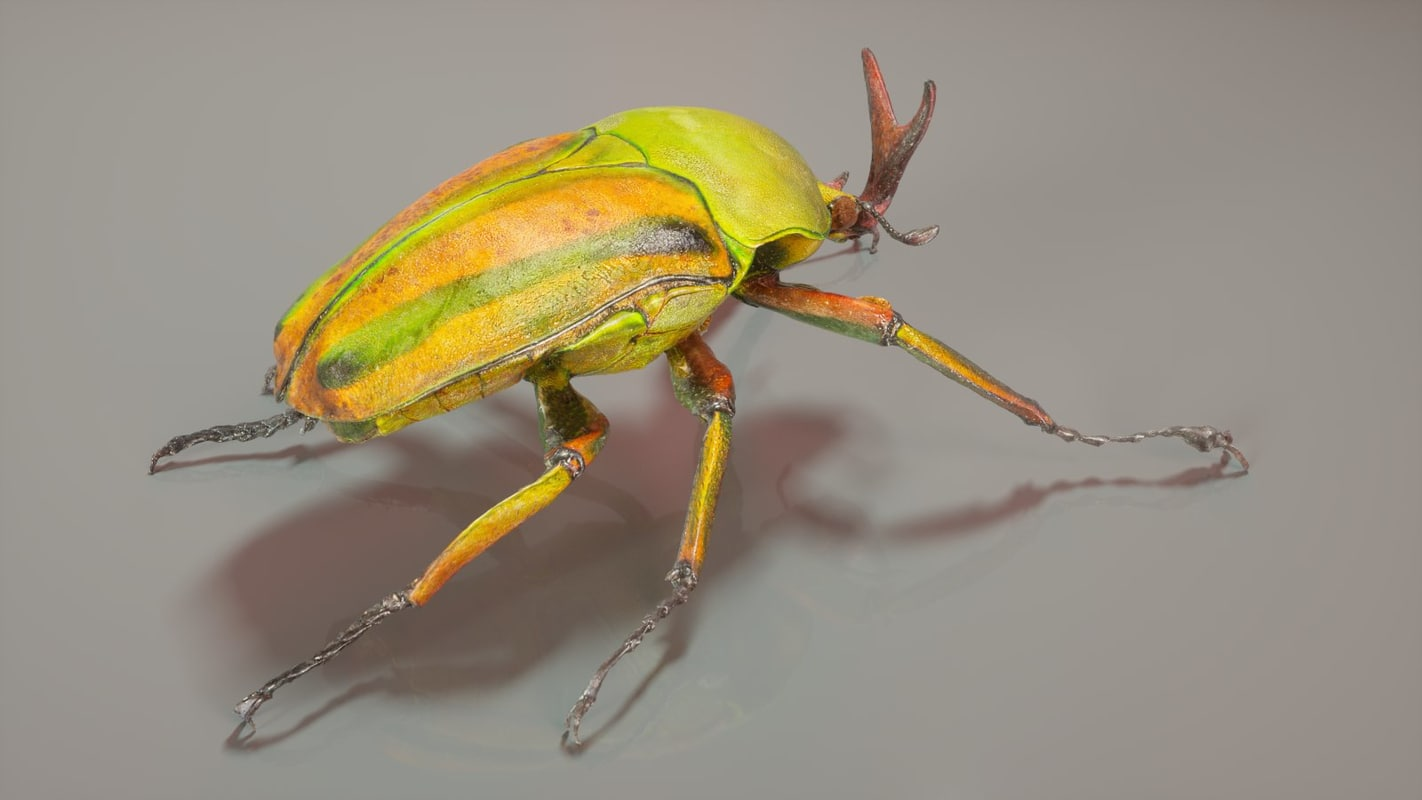 3d photorealistic beetle
