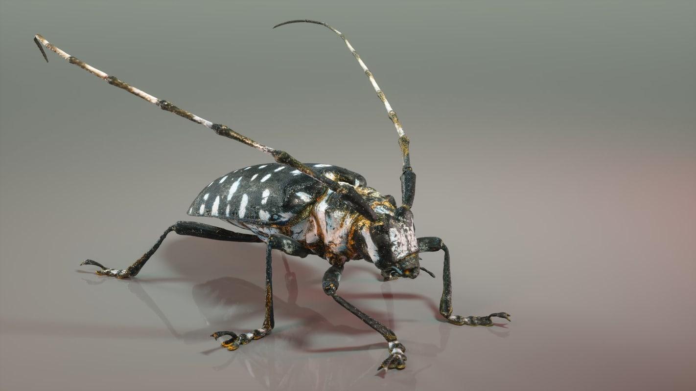 3d calloplophora sollii beetle