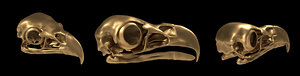 skull eagle 3d model