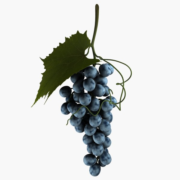 blue grapes 3d model