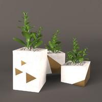 plant money tree 3d max