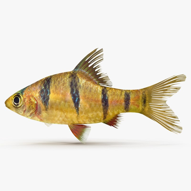 3ds tiger barb