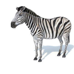 photorealistic zebra 3d model