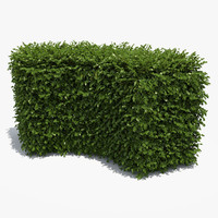 free boxwood hedge 3d model