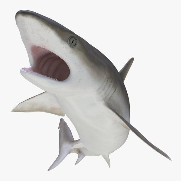 blacknose shark rigged max
