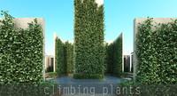 plant climb max