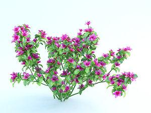 3d model of azalea bush flowers
