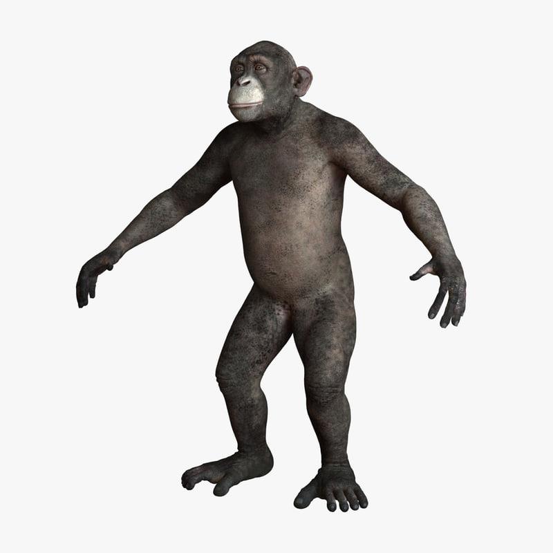chimpanzee chimp 3d model