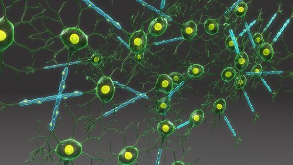 structure neuron 3d model