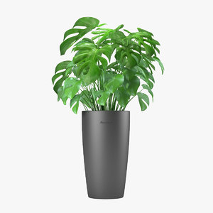 monstera flowering 3d model