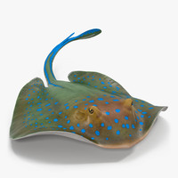 Blue Spotted Stingray Rigged 3D Model