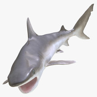 blacknose shark pose 2 3d model