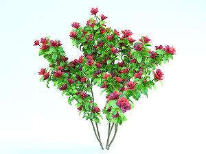 flowering azalea max