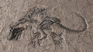3d t fossil tyrannosaur model
