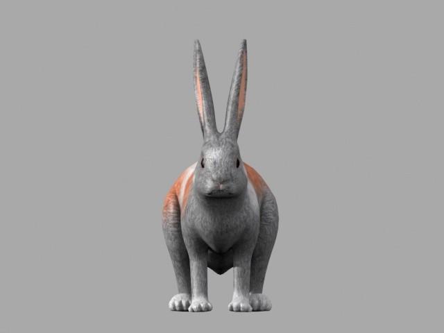 max rabbit animate
