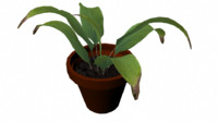 3d model plant potted