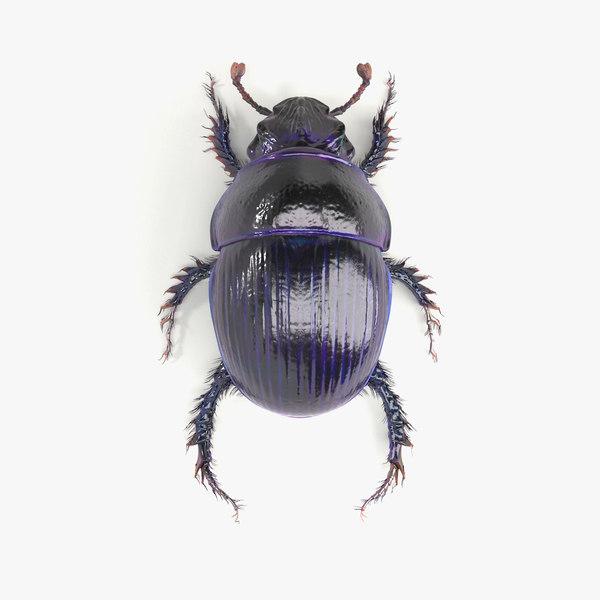 3d scarab beetle