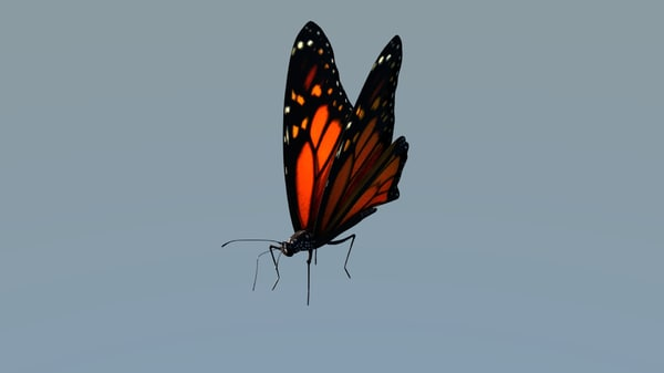 3d model monarch butterfly animations rig