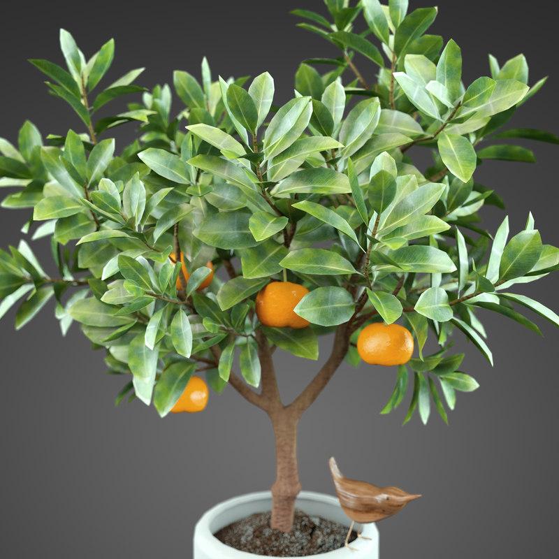 max plant orange tree